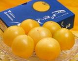 『稀色スイートピュア(黄色)』 静岡県産フルーツトマト 約900g ※常温の商品画像