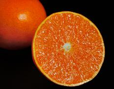 2/1〜6出荷 『紅香(べにかおり)』長崎県産柑橘 小玉 約3kg(15〜21玉) ※常温
