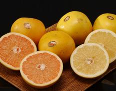 4/13〜18出荷 『ゴールデンクラウングレープフルーツ』フロリダ産 ルビーレッド(赤)&ホワイト(白)各1箱 合計約5kg(1箱 約2.5kg:6〜8玉入り) ※常温
