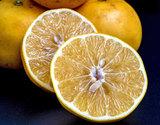 安田昌一さんの『突風被害のグレープフルーツ』熊本県産 約3kg(8〜12玉)※常温の商品画像