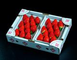 『ミガキイチゴ』宮城県産 シルバーランク 約640g(320g×2パック) ※冷蔵の商品画像