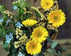 10/26〜11/7出荷 葛西市場よりお届け『季節のお花 色はおまかせセット』生花 3品種前後 20本以上 ※常温【★】#元気いただきますプロジェクト