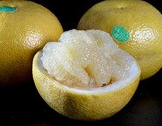 4/13〜18出荷 園地指定の完熟品『ゴールデンオロブロンコ』カリフォルニア産柑橘 約3kg×2箱(1箱の目安:7〜11玉程度)※常温