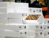 【相場下落】『特選 生しいたけ(菌床)』 岩手・山形・徳島県産 約500g 1箱(目安として12〜18個)※冷蔵の商品画像