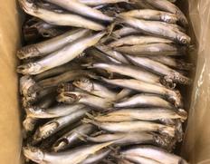 4/13以降順次出荷 【給食応援】「アイスランド産 シシャモ干物」300本 約5kg(1個約17g/バラ凍結) ※冷凍