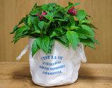 【花農家・花市場応援】高橋さんの『ペンタス』 鉢植え5号鉢 色:フラーティピンクの商品画像
