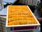 【お買い得】『エゾバフンウニ』弁当箱(並び)約250g 北海道またはロシア産 ※冷蔵【豊洲市場直送】の商品画像