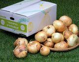 産地応援『サラダたまねぎ』熊本県津奈木町産 7kg(サイズ混合)※常温の商品画像