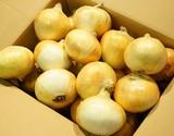 【産地応援価格】『新たまねぎ』千葉県白子町産 A品 LLサイズ 約10kg(22〜26玉程度)※常温の商品画像