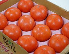6/1〜13出荷 【フードロス削減】熊本県 八代産トマト または たまな産トマト LL〜3L 12玉入り×1箱 もしくは 4玉入り×3箱 約4kg(風袋込み) ※冷蔵
