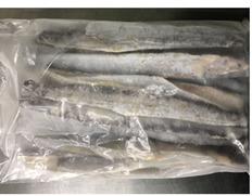 5/17〜29出荷 【食べて応援】京都府産 太刀魚フィーレ1kg(1kg×1袋)※冷凍