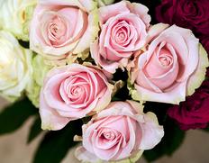 安間ばら園から直送 『バラの花束』 20本 色はお楽しみ ※冷蔵【★】#元気いただきますプロジェクト