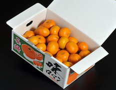1/25〜2/6出荷 JA長崎せいひ 長崎県産みかん『味ロマン』多少のキズ有 2S〜Mサイズ 約2.5kg