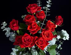 『最愛の薔薇』 愛知県・群馬県・他産 赤いバラ11本の花束 ※常温