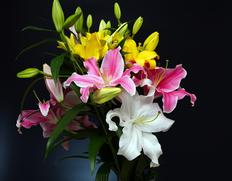 八丈島から直送!カサブランカとユリの花束のお取り寄せ