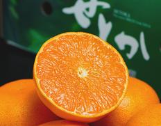 1/25〜2/6出荷 『せとか』佐賀県産 柑橘 M〜Lサイズ 約2.5kg(12〜18玉)化粧箱 2箱セット ※常温