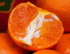 1/25〜2/6出荷 JAからつ『津之輝(つのかがやき)』佐賀県産柑橘 2S〜2Lサイズ 風袋込約5kg(22〜60玉) 産地箱入 ※常温
