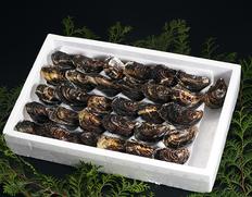「業務用くにさきOYSTER(生食用牡蠣)」 大分産 1.5kg(30個前後) ※冷蔵