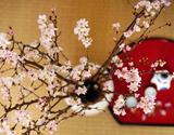 葛西市場よりお届け『啓翁桜(ケイオウザクラ)』 枝10本(目安として1本:60〜65cm)※常温の商品画像