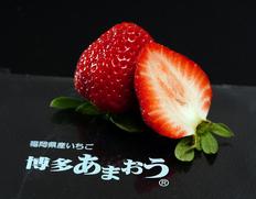4/12〜24出荷 2種苺食べ比べセット『あまおう』×『古都華』 奈良県・福岡県産いちご 約1kg 各2P ※冷蔵