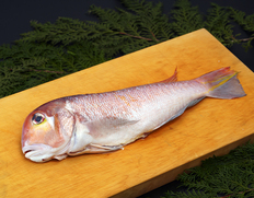 『甘鯛(ぐじ)』長崎他九州産 1尾 0.7kgUPのお取り寄せ