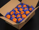 安田昌一さんの『七面鳥農法・不知火(しらぬひ)』 熊本県産柑橘 約5kg(12〜18玉)化粧箱 ※冷蔵の商品画像