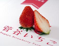 5/10〜22出荷 『菅谷さんのいちご』茨城県産 約420g(15粒)化粧箱入り※冷蔵