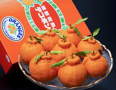 愛知県 蒲郡産 大玉『樹熟デコポン』赤秀品 約3kgのお取り寄せ