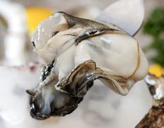 北海道厚岸産 生食用牡蠣 弁天かき 20個(殻付き110〜140g/個) ※冷蔵