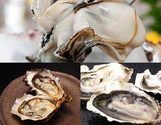 北海道厚岸産 『ブランド牡蠣 3種食べ比べセット(生食用)』15個(3種×各5個) ※冷蔵