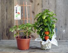 イベント自粛の影響が続く花農家・市場応援のお取り寄せ通販