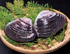 肉厚で、強い甘さ 北海道 長万部 天然 黒ホッキ貝のお取り寄せ