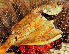 『のど黒 一夜干し (超特大)』日本海山陰西部産 原魚約600g(干しあがり約420g)1枚 ※冷凍