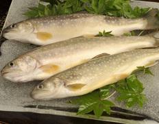 田沢湖トラウトファームの「岩魚(イワナ)」 3尾セット ※冷凍