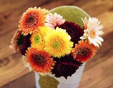 葛西市場よりお届け 『秋のお花 ポンポン咲・八重咲のガーベラ』 生花 15本前後 色はおまかせ 簡易包装 ※冷蔵