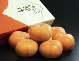 JAとぴあ浜松 『浜北次郎柿』(ハウス栽培品)静岡産 秀品 約2kg(8〜9玉)  化粧箱 ※常温の商品画像