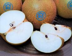 新潟県オリジナル品種『新王』を9/25出荷【8箱限定】のお取り寄せ