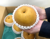 『にっこり梨』 栃木県産  秀品 7玉 計約5kg ※常温 【大田夜市】の商品画像