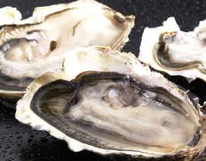 北海道厚岸産 生食用牡蠣 マルえもん Lサイズ25個(殻付き) ※冷蔵